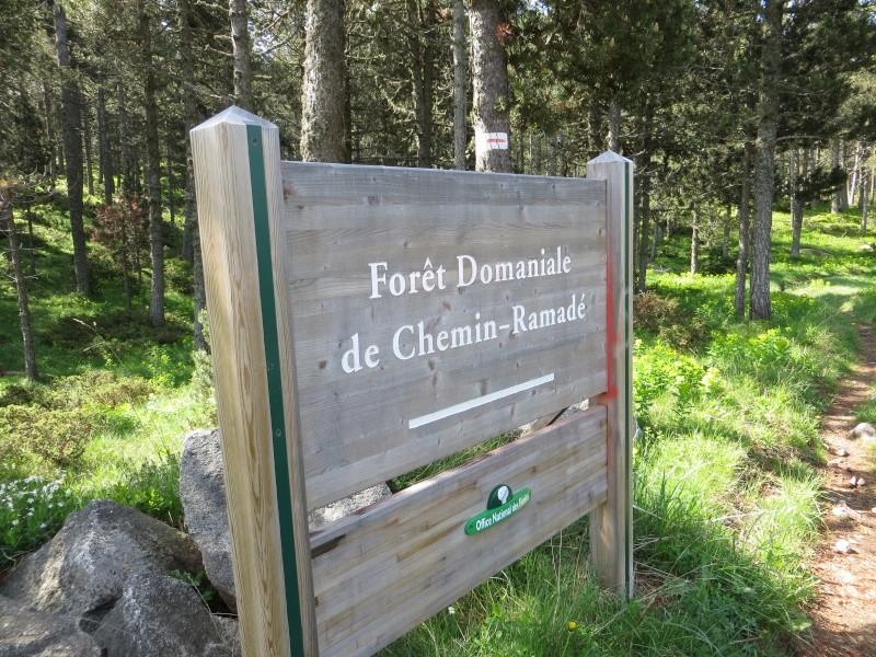 La Forêt domaniale de La Llagonne Img_3111