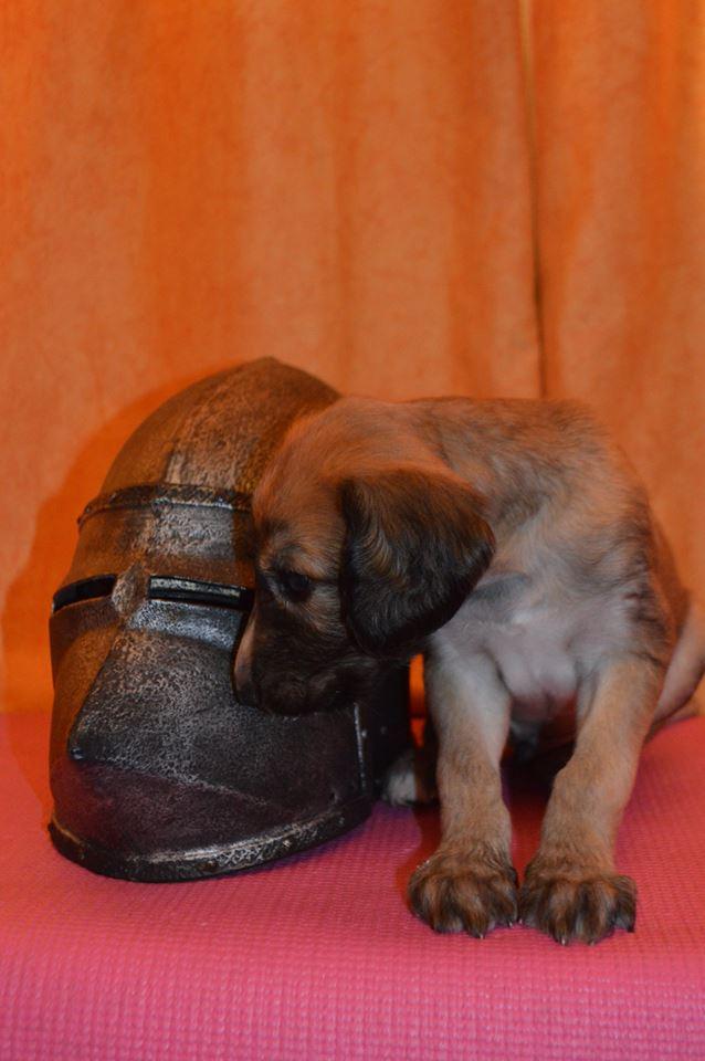 14.07.15г в питомнике  родились  щенки Iae110