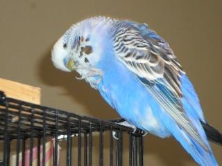 Notre vie avec les oiseaux Onduly11