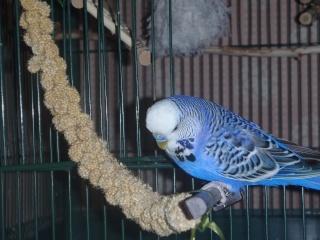 Notre vie avec les oiseaux Onduly12