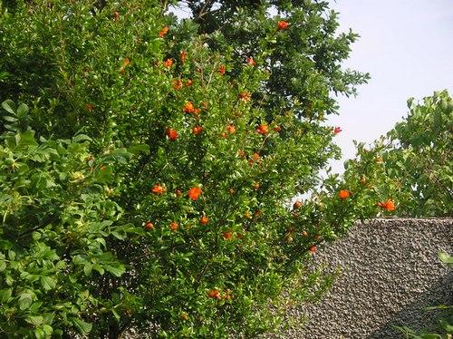 Floraisons printanières 2015 - Page 2 Imgp0033