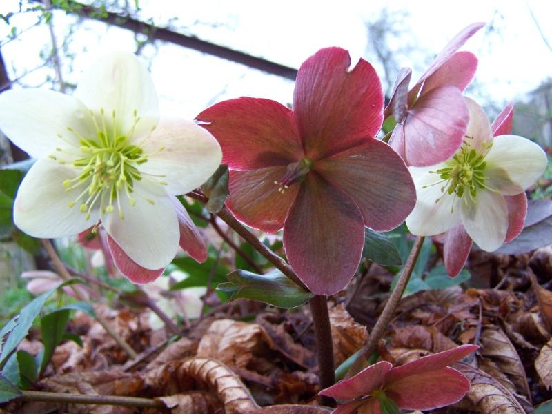 Les photos d'un jardin... 100_2410