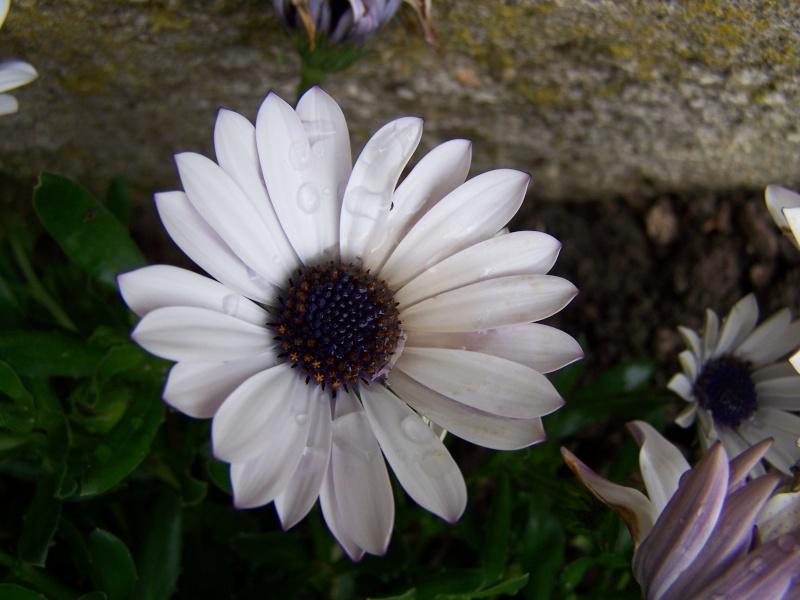 Les photos d'un jardin... 100_2518