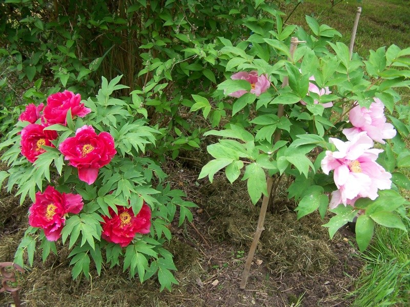 Les photos d'un jardin... 100_2611