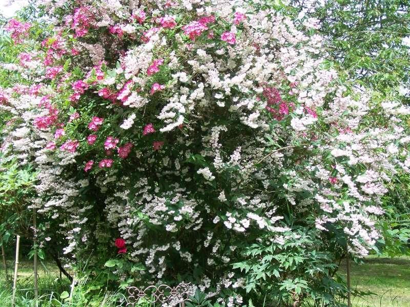 Les photos d'un jardin... 100_2823