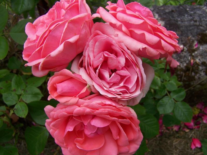 Les photos d'un jardin... 100_2824