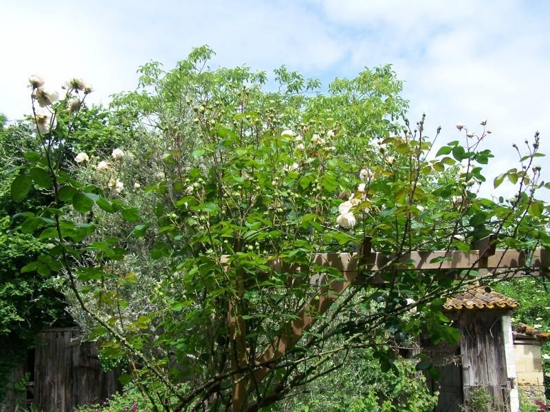 Les photos d'un jardin... 100_2825