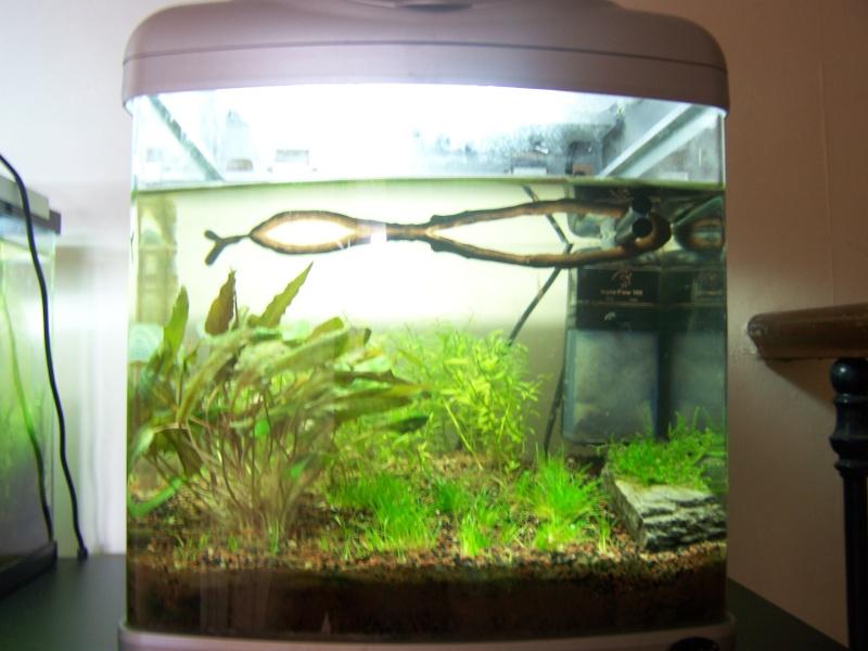 Deux petits aquariums... 100_2826