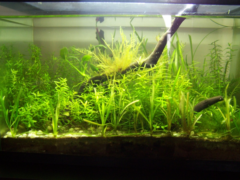 Deux petits aquariums... 100_2827