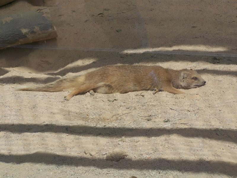 Parc animalier de la tête d'or. 100_3010