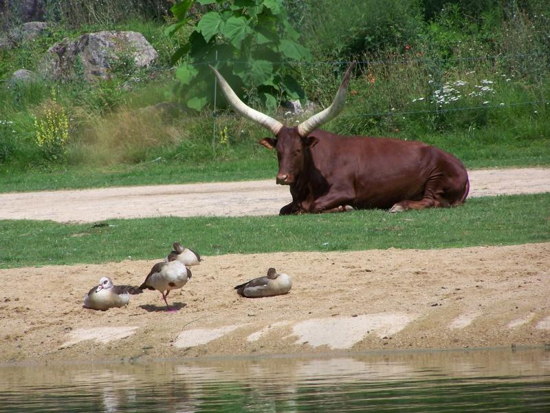 Parc animalier de la tête d'or. 100_3014