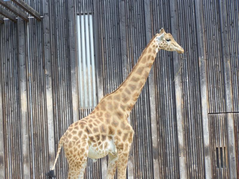 Parc animalier de la tête d'or. 100_3018