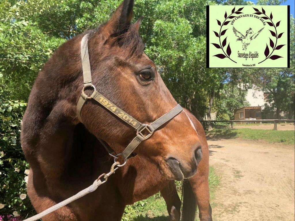 Dept 13 , JACOBIN cheval de selle né en 1997 , replacement très urgent , contact Girasol Www_ki10