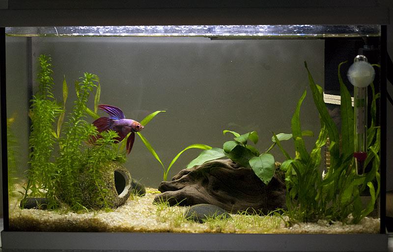 plante gazonnante _mg_6014