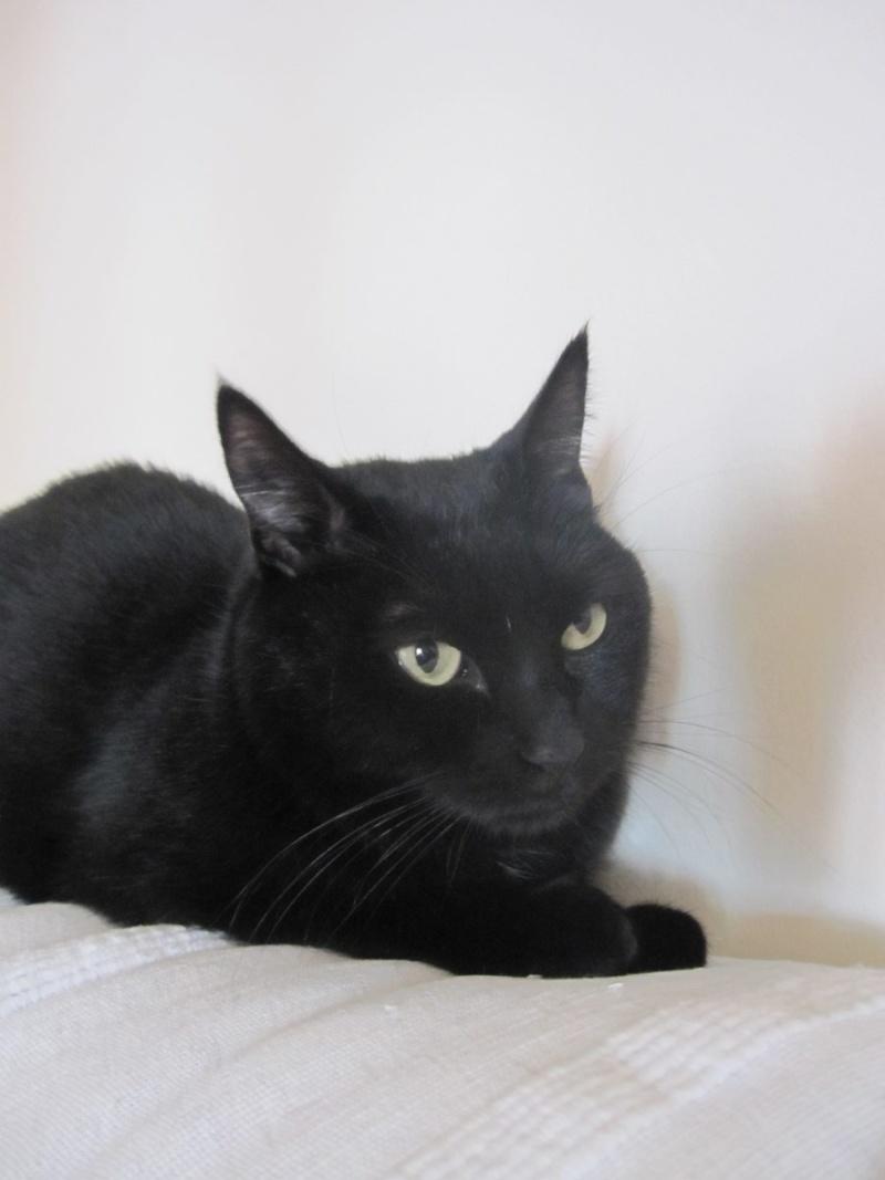 Hania, chatte européenne noire, née en septembre 2012 Img_1613