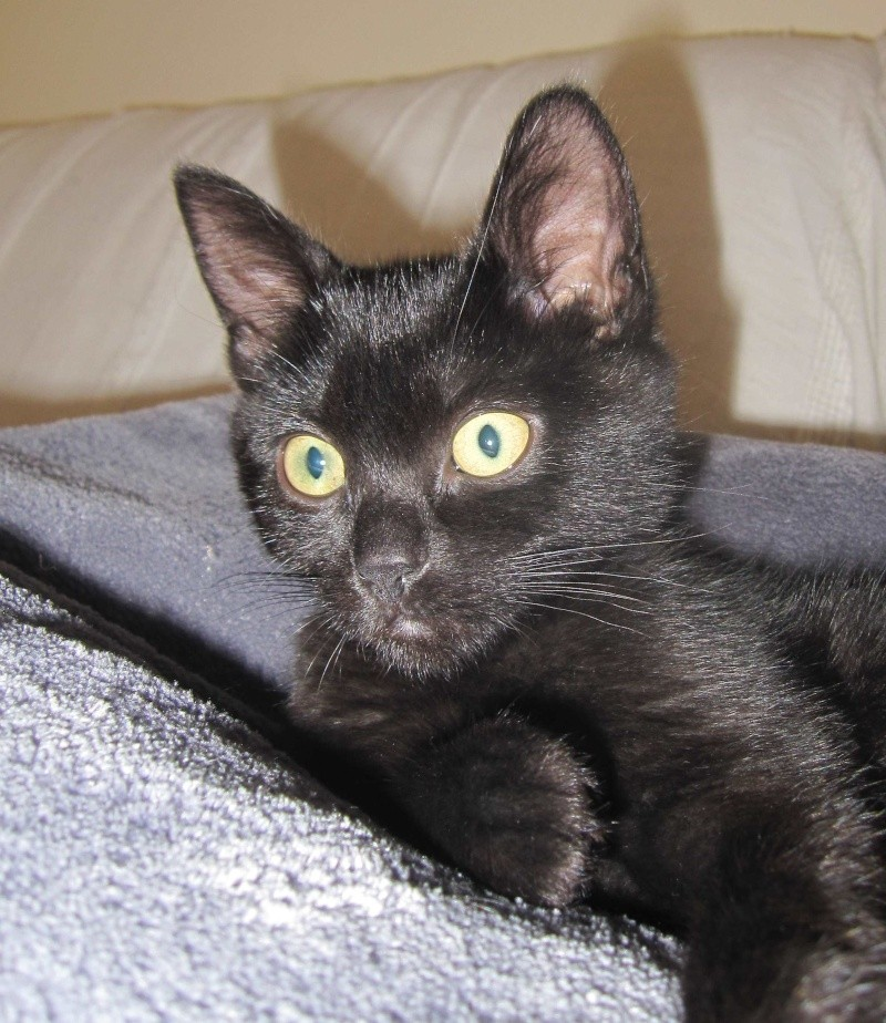 Lucky, chaton mâle noir, né le 01/04/2015 - Page 1 Img_1712