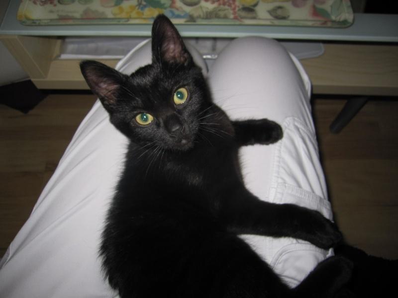 Lucky, chaton mâle noir, né le 01/04/2015 - Page 1 Img_1714
