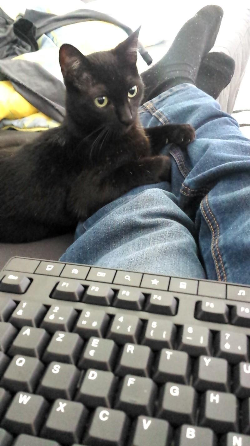 joliot - JOLIOT, chaton européen robe noire, né le 08/09/14 Snapch10