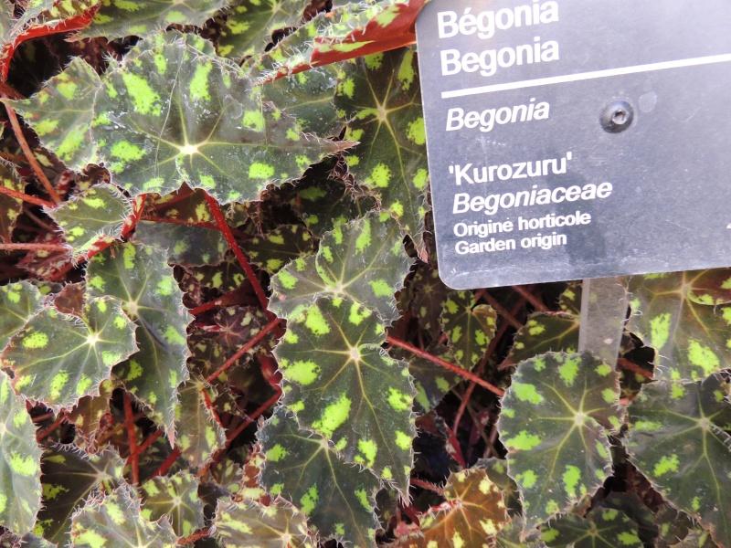 (Québec) Jardin Botanique de Montréal Dscn1422