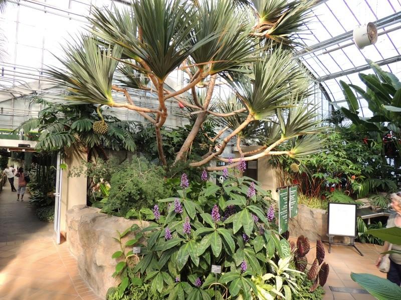 (Québec) Jardin Botanique de Montréal Dscn1434