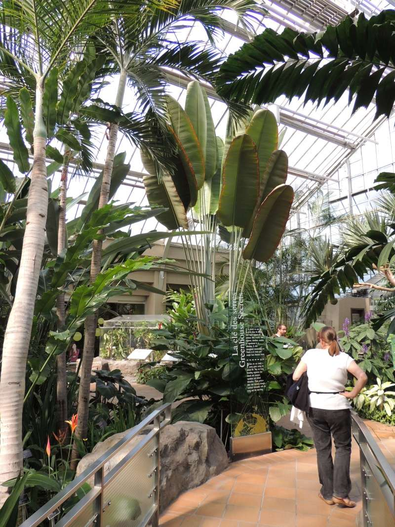 (Québec) Jardin Botanique de Montréal Dscn1436