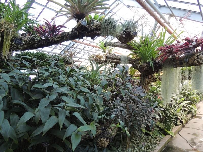(Québec) Jardin Botanique de Montréal - Page 2 Dscn1440