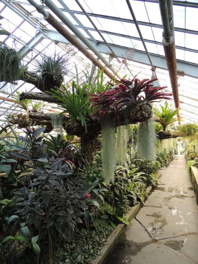 (Québec) Jardin Botanique de Montréal - Page 2 Dscn1441