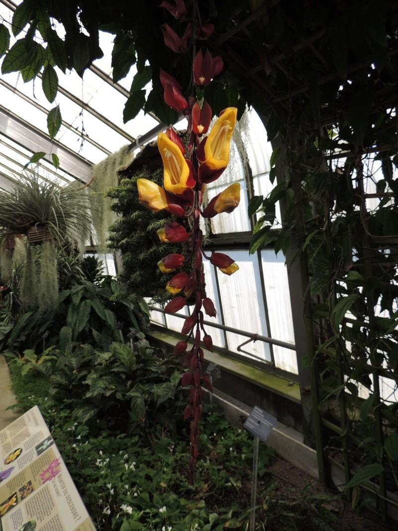 (Québec) Jardin Botanique de Montréal - Page 2 Dscn1444