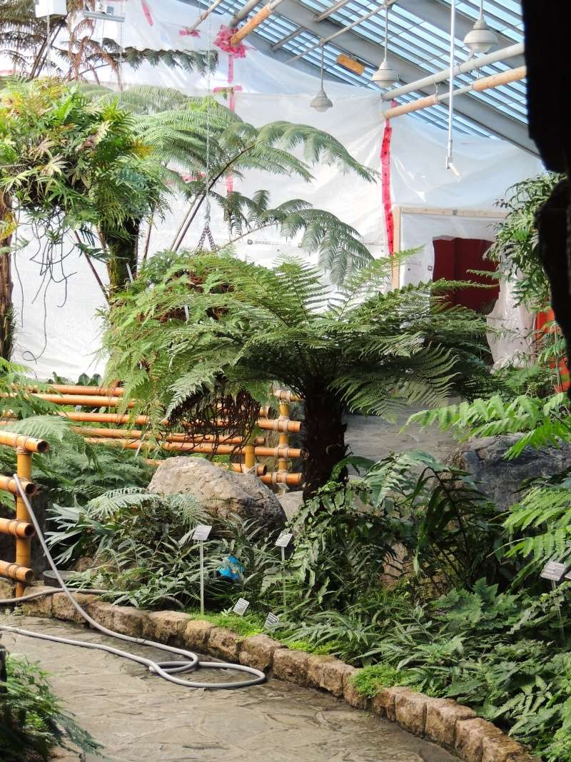 (Québec) Jardin Botanique de Montréal - Page 2 Dscn1445