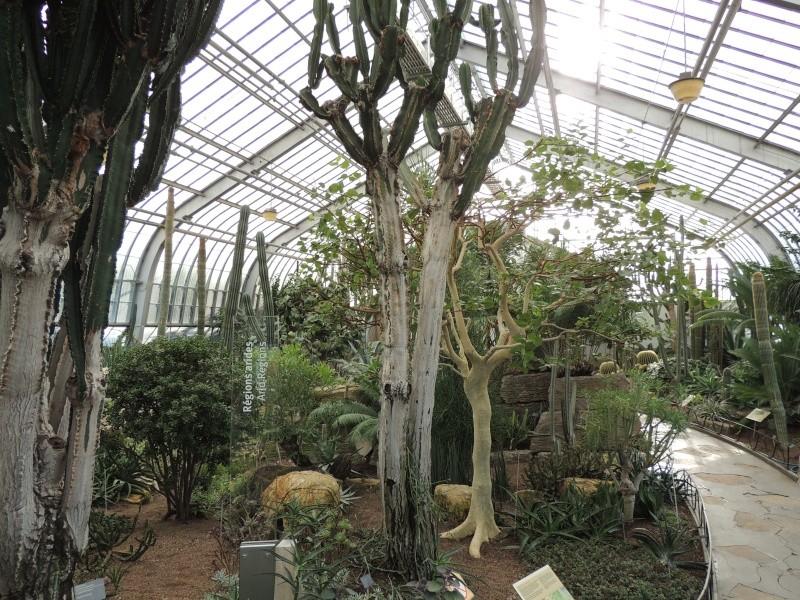 (Québec) Jardin Botanique de Montréal Dscn1510