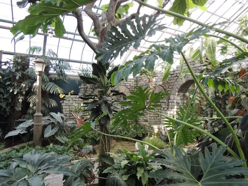 (Québec) Jardin Botanique de Montréal Dscn1520