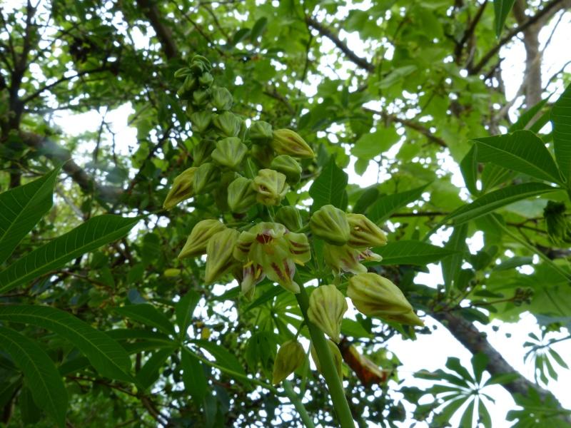 butinages du jour à l'ombre de nos plantes  - Page 2 Maniho12