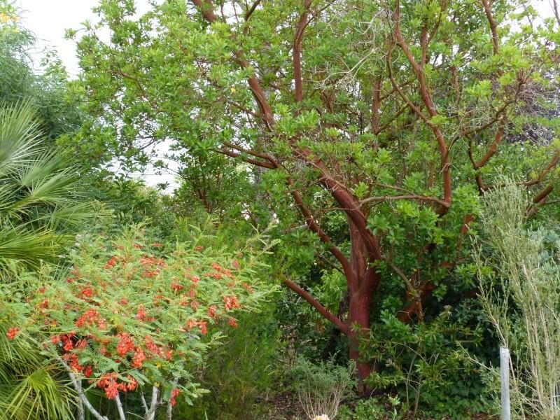 butinages du jour à l'ombre de nos plantes  - Page 2 Sesban12