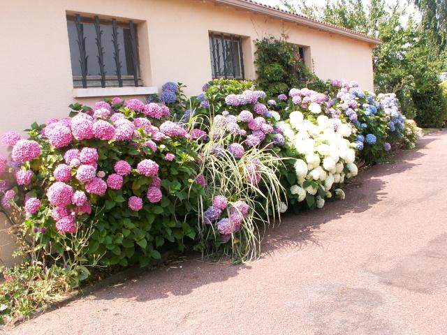 butinages du jour à l'ombre de nos plantes  Pict0050