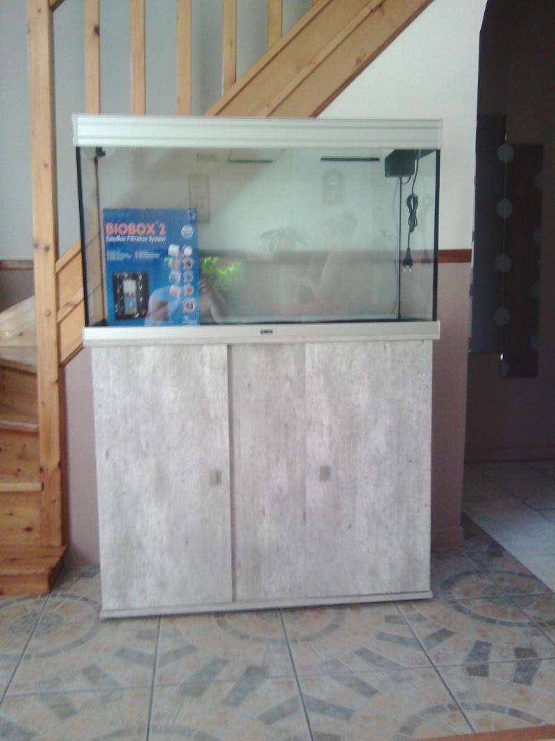 Mon nouveau aquarium Img_2011