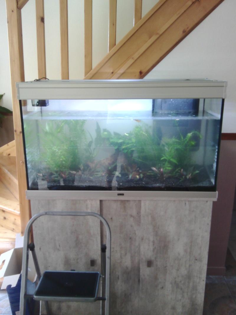 Mon nouveau aquarium Img_2015