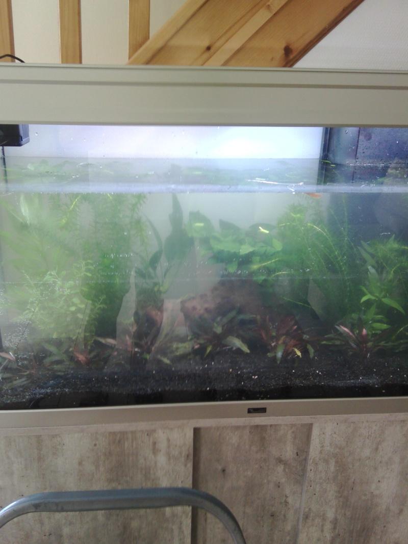 Mon nouveau aquarium Img_2016