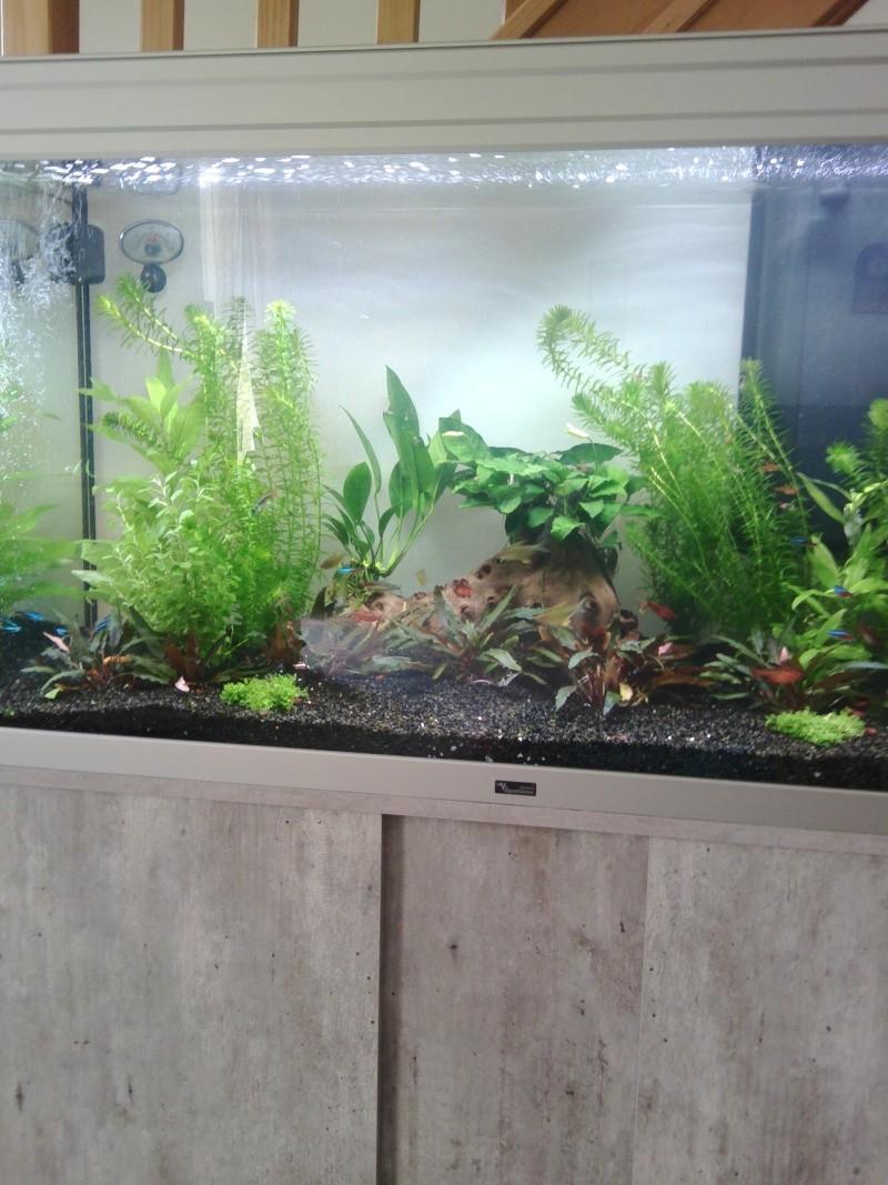 Mon nouveau aquarium Img_2018