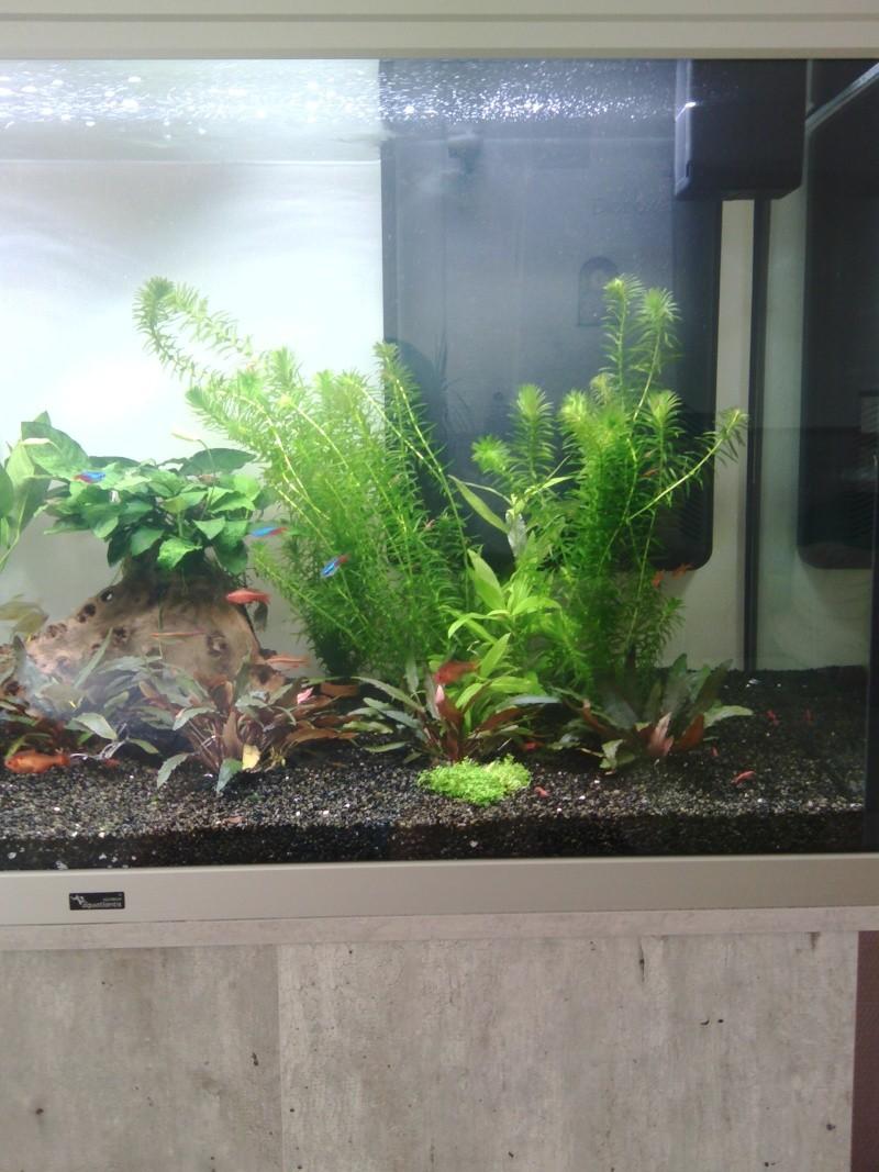 Mon nouveau aquarium Img_2019