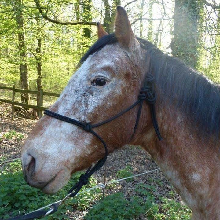 INDIANA - OI type poney née en 1994 - adoptée en juillet 2016 par Adeline Indian11