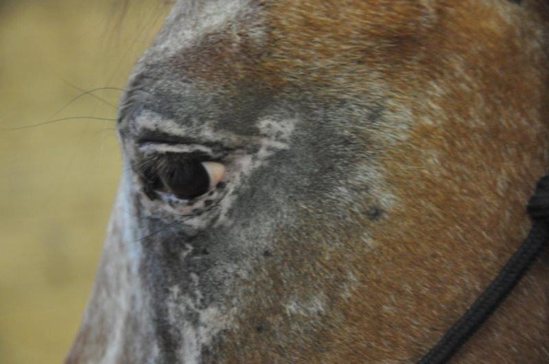 INDIANA - OI type poney née en 1994 - adoptée en juillet 2016 par Adeline Indian15