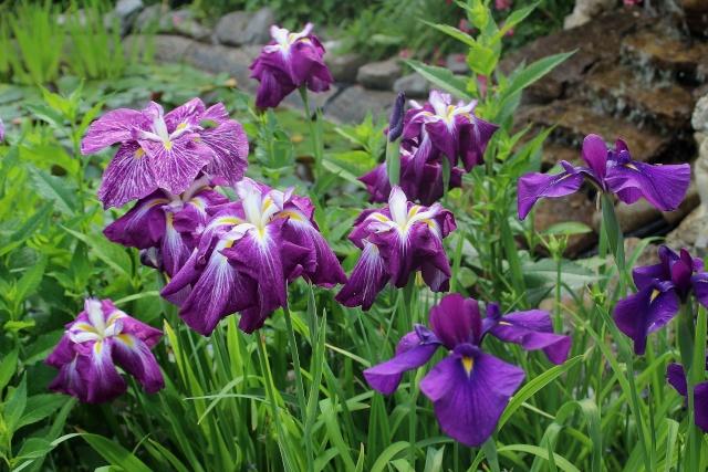 Iris 2015 - Page 3 Taketo10