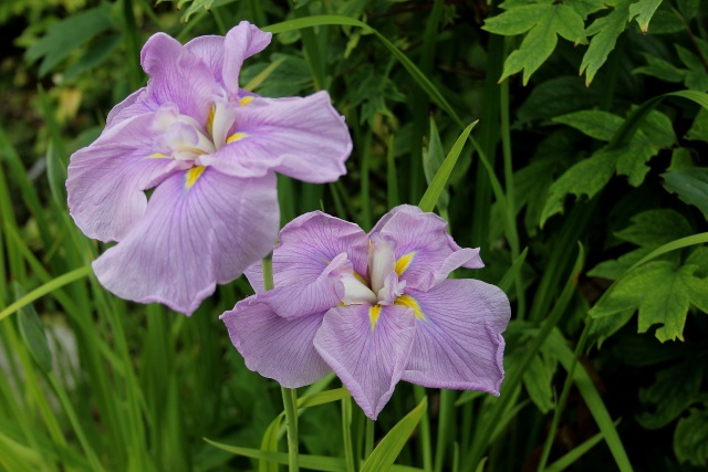 Iris 2015 - Page 3 Worley10