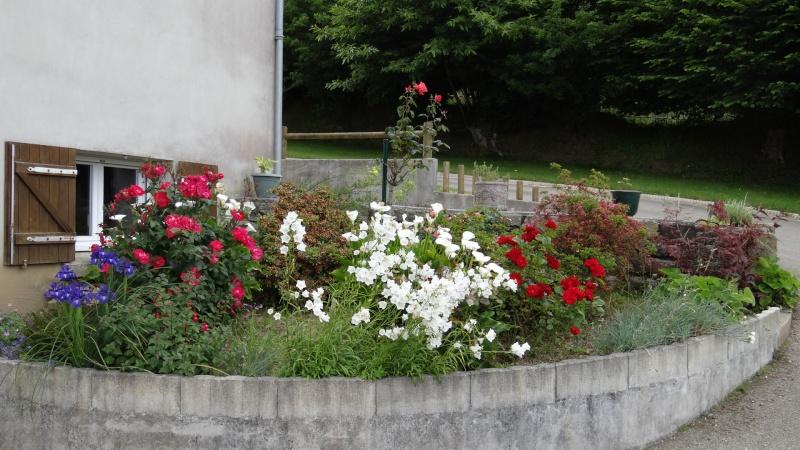 jardin fleuri   Dsc04217