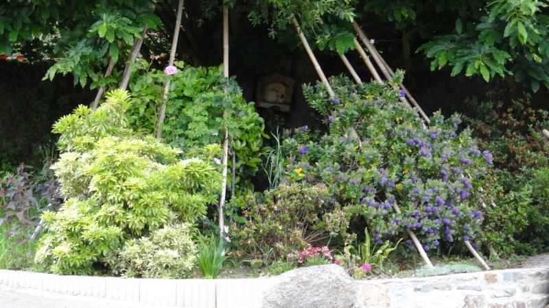 jardin fleuri   Dsc04218