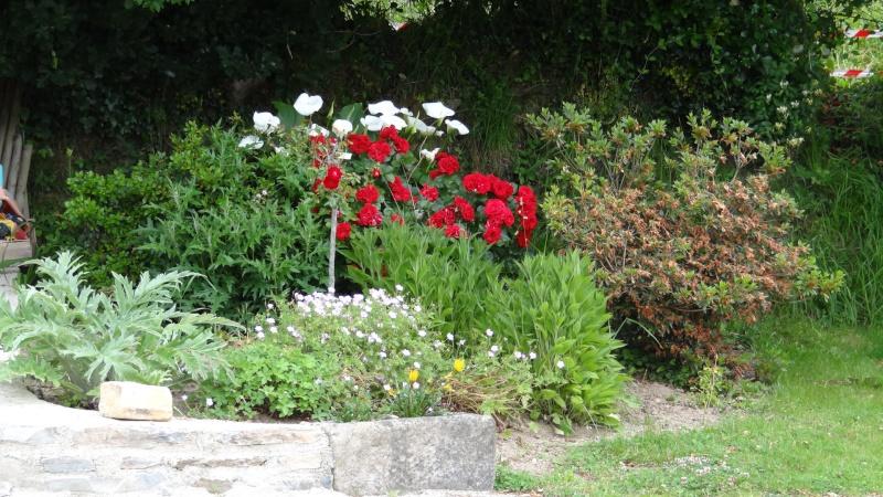 jardin fleuri   Dsc04219