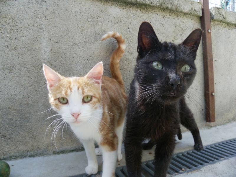 REGLISSE (chaton mâle noir) Lissy_10