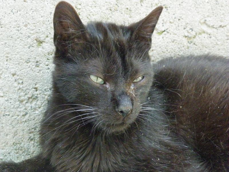 REGLISSE (chaton mâle noir) Ryglis10