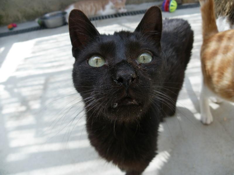 REGLISSE (chaton mâle noir) Ryglis11