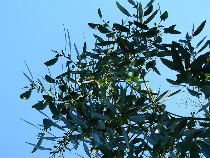 butinages du jour à l'ombre de nos plantes  - Page 3 Dex511